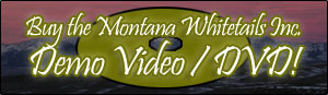 Buy the Montana Whitetails DVD!